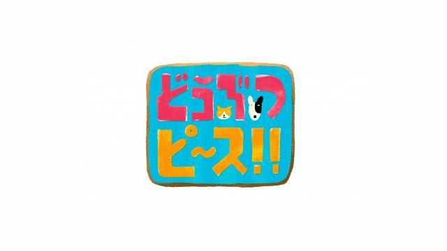 テレビ東京「どうぶつピース!!」(12/19OA)内コーナーVTR制作協力